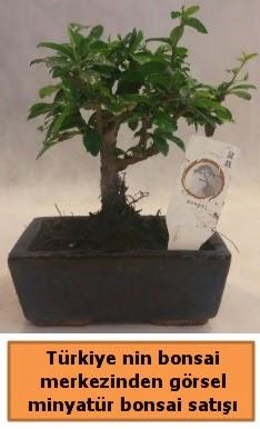 Japon ağacı bonsai satışı ithal görsel  Tunceli çiçek mağazası , çiçekçi adresleri