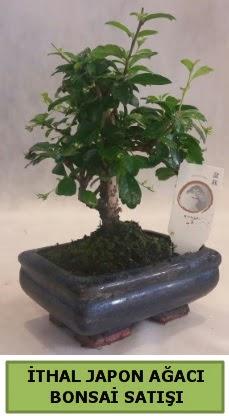 İthal japon ağacı bonsai bitkisi satışı  Tunceli güvenli kaliteli hızlı çiçek