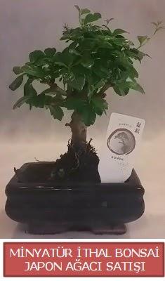 Küçük görsel bonsai japon ağacı bitkisi  Tunceli online çiçekçi , çiçek siparişi