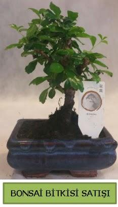 Bonsai ithal görsel minyatür japon ağacı  Tunceli çiçek yolla , çiçek gönder , çiçekçi