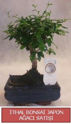 İthal küçük boy minyatür bonsai ağaç bitkisi  Tunceli güvenli kaliteli hızlı çiçek