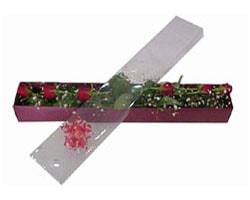 Tunceli çiçekçiler   6 adet kirmizi gül kutu içinde