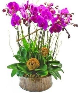 Ahşap kütükte lila mor orkide 8 li  Tunceli çiçek gönderme