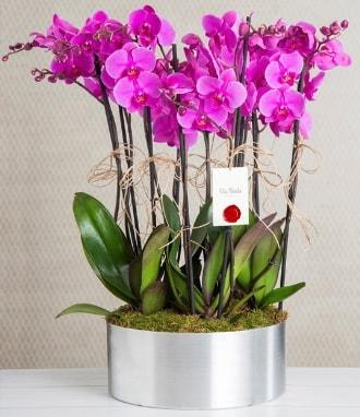 11 dallı mor orkide metal vazoda  Tunceli çiçek servisi , çiçekçi adresleri