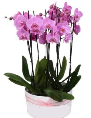 Beyaz seramik içerisinde 7 dallı mor orkide  Tunceli güvenli kaliteli hızlı çiçek