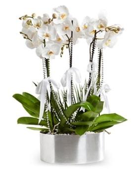 Beş dallı metal saksıda beyaz orkide  Tunceli çiçek mağazası , çiçekçi adresleri