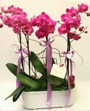 Beyaz seramik içerisinde 4 dallı orkide  Tunceli çiçek yolla , çiçek gönder , çiçekçi