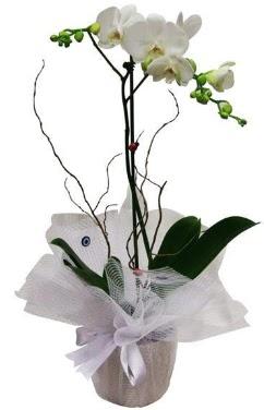Tek dallı beyaz orkide  Tunceli hediye çiçek yolla