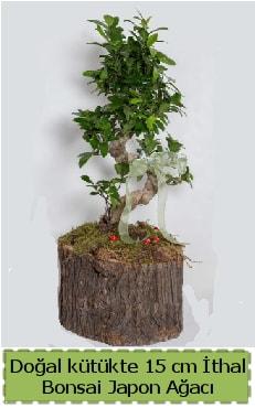 Doğal kütükte İthal bonsai japon ağacı  Tunceli kaliteli taze ve ucuz çiçekler