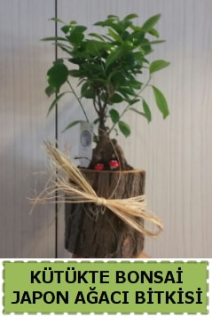 Kütük içerisinde doğal bonsai ağacı  Tunceli güvenli kaliteli hızlı çiçek