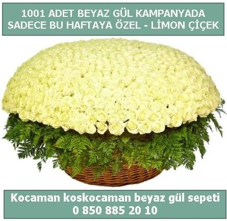 1001 adet beyaz gül sepeti özel kampanyada  Tunceli çiçek servisi , çiçekçi adresleri