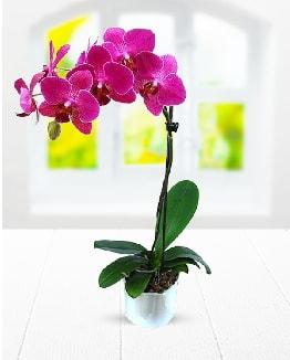 Tek dallı mor orkide  Tunceli yurtiçi ve yurtdışı çiçek siparişi
