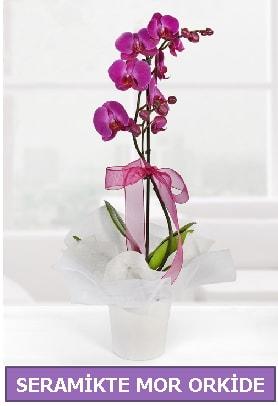 Seramik içerisinde birinci kalite tek dallı mor orkide  Tunceli çiçek online çiçek siparişi