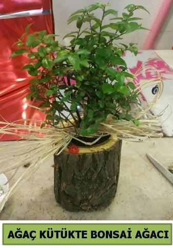 Doğal ağaç kütük içerisinde bonsai ağacı  Tunceli çiçek servisi , çiçekçi adresleri