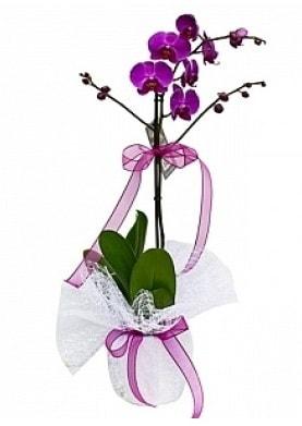 Tekli Mor Orkide  Tunceli çiçek mağazası , çiçekçi adresleri