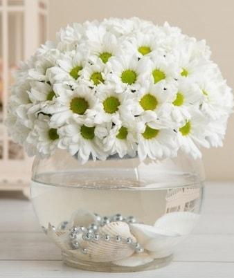 Fanusta beyaz Papatya  Tunceli yurtiçi ve yurtdışı çiçek siparişi