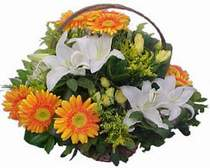 Tunceli anneler günü çiçek yolla  sepet modeli Gerbera kazablanka sepet